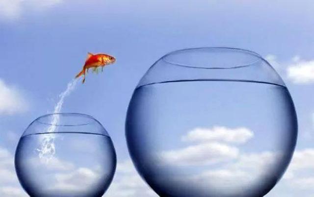 goldfish jumping from small bowl to bigger goldfish bowl