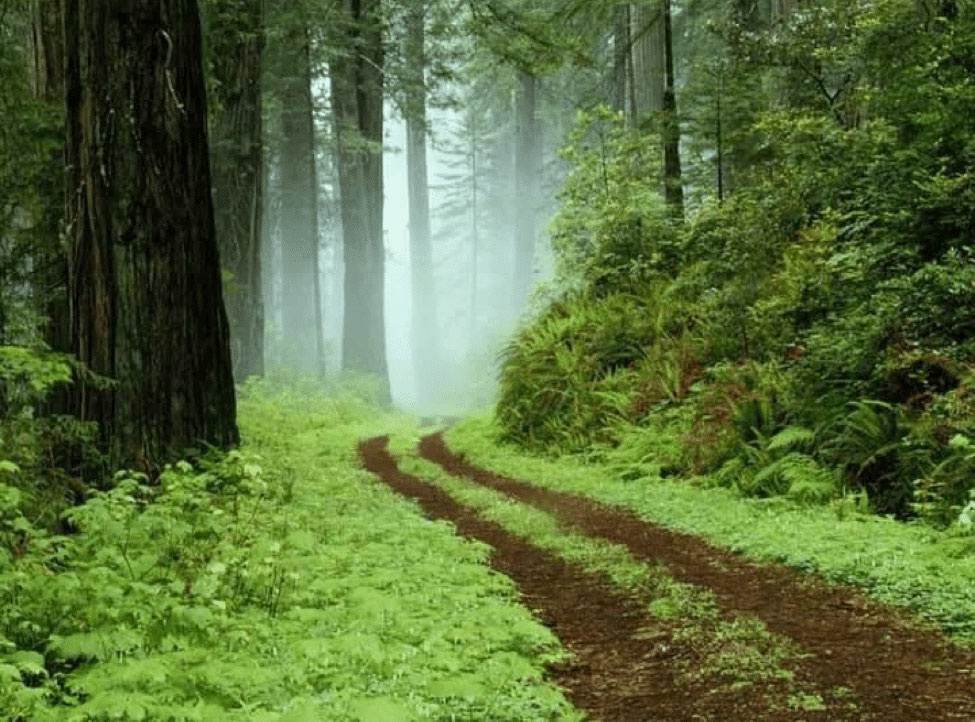 red earth tracks through lush green forest in morning mist