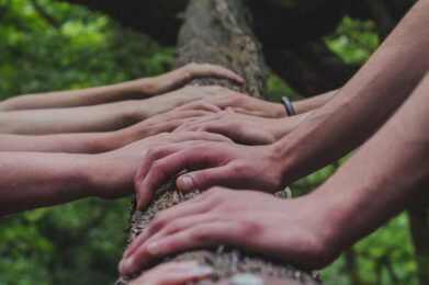 hands on tree trunk | Team Building with NVC Training | photo by Shane Rounce on Unsplash